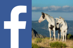 Visuel Facebook Painthorsemountain